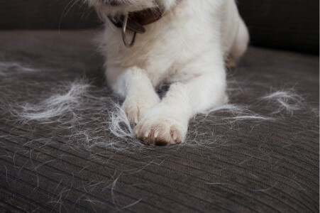 Clear out pet hair